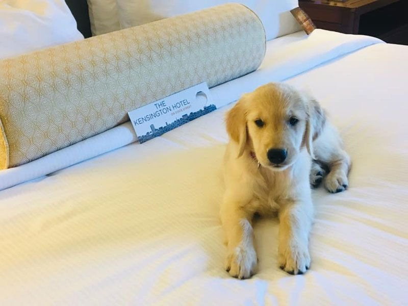 ann arbor pet friendly hotel